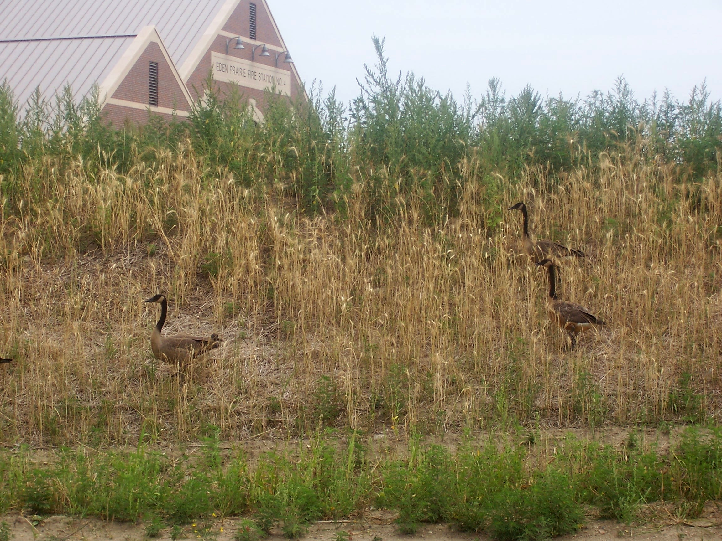 wildlife in minnesota townhome association