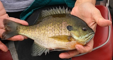 Sit on Your Fanny at Lake Fannie, Isanti County MN, and Catch some Panfish!