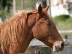 Twin Cities MN Hobby Farms and Horse Ranches With Stables